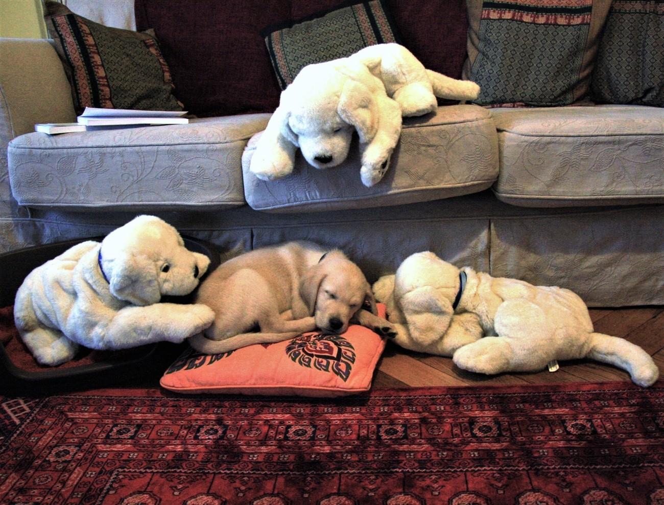 Мягкие игрушки собачки как настоящие в квартире у владельцев